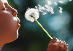 Boy blowing a dandelion - I have memories of doing this myself as a girl, many many times!