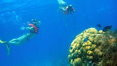 Six best places to scuba dive/snorkel in Cozumel (Photo Credit: Cozumel Promotional Board)