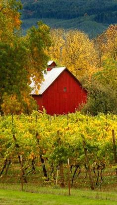 78 Stunning Red Barn You'll Actually Want To Know Country Barns, Country Life, Country Charm, Country Living, Rustic Landscaping, Barns Sheds, Country Scenes, Red Barns, Beautiful Buildings