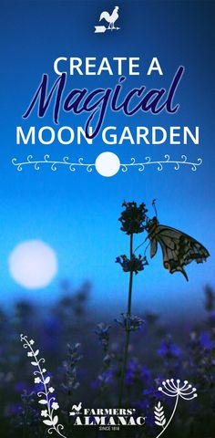 Create A Magical Moon Garden Celebrate moonlit nights by relaxing or entertaining guests in your very own Moon Garden, planted specifically to show off the lunar glow! A Moon Gard. Organic Gardening, Gardening Tips, Kitchen Gardening, Gardening Quotes, Container Gardening, White Flowers, Beautiful Flowers, White Flowering Plants, Night Blooming Flowers