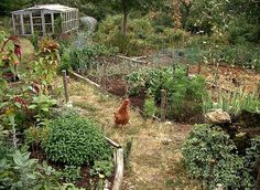 permaculture in France ~ I love all the photos here. And details about free-range chickens around gardens