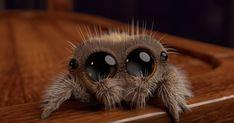 Voici Lucas, l'araignée la plus adorable qui guérira votre arachnophobie Cute Baby Animals, Animals And Pets, Funny Animals, Wild Animals, Pixar, Lucas The Spider, Animated Spider, Giant Spider, Jumping Spider