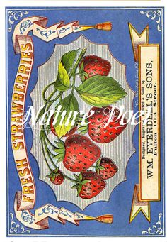 Vintage Label with Strawberries Downloadable by naturepoet on Etsy, $5.00