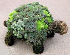 Tortuga topiario creada con suculentas - Love this for my Garden! Succulent Turtle Topiary created with Succulents