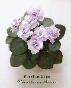 Persian-lace