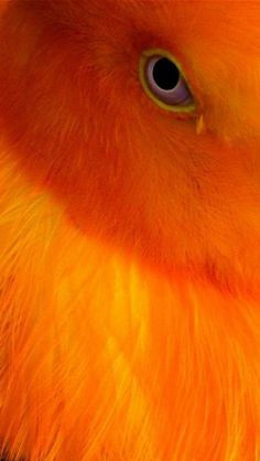 Bird ~ intense yellow and orange detail Curated for your pinning pleasure by prolabdigital.com