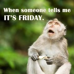 Someone Told Me, When Someone, Friday Fun, Words, Funny, Animals, Animales, Animaux, Funny Parenting