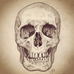 Pencil sketch of human skull