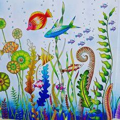 #おとなのぬりえ #大人の塗り絵#ぬりえ #海の楽園 #ジョハンナバスフォード#コロリアージュ #adultcoloringbook  #coloriage  #coloringbook #coloring #johannabasford #lostocean
