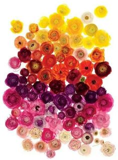 Ranunculus in rainbow order. Super inspiring and beautiful to behold.