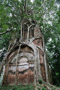 Tree growing around an abandoned building. Location unknown.