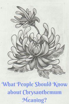 tattoos yellow chrysanthemum tattoo on chest chrysanthemum tattoos . Time Tattoos, Body Art Tattoos, Tattoo Drawings, Sleeve Tattoos, Tattoo Ink, Chrysanthemum Meaning, Chrysanthemum Tattoo, Yellow Chrysanthemum, Plumeria Tattoo