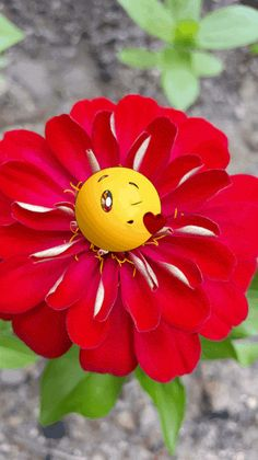 The perfect Emoji Flowers YouAreAwesome Animated GIF for your conversation. Discover and Share the best GIFs on Tenor. Good Morning Flowers, Good Morning Gif, Friday Morning, Good Morning Quotes, Beautiful Gif, Beautiful Flowers, Beautiful Pictures, Images Emoji, Emoji Pics