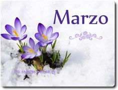 Marzo immagine 2 Vernal Equinox Day, Spring Time, Cute Pictures, Seasons, Sayings, Google Search, Frases, Winter Time, Covers For Facebook