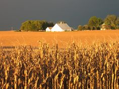 Iowa storms-remember lookin out our  Nebraska fields at same. You could see that comin across the plains for  miles...<3