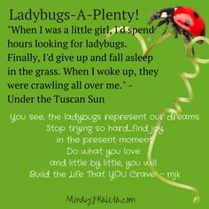 The Ladybug Quote - Under the Tuscan Sun
