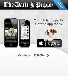 Dogs, Dog Pictures, Dog Names, Training, Care & More | Daily Puppy
