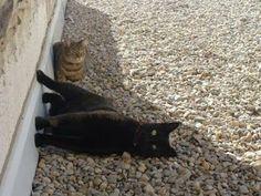 Cute CATS - Google+
