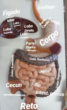 Psychology Notes, Medicine Student, Biomedical Science, Human Body Anatomy, Medical Anatomy, Med Student, Med School, Anatomy And Physiology, Study Notes