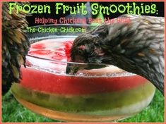 Frozen Fruit Smoothies for chickens in high heat.