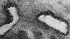 + - Cientistas e especialistas da NASA têm despendido décadas, e bilhões de dólares, à procura de traços de água no estado líquido e vida em Marte. Mas, um fã do assunto alega ter encontrado uma imagem de um lago com margens arborizadas, a partir de um satélite da NASA, o Mars Global Surveyor. Will …