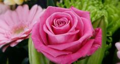 Mother's Day Rose, Children, Day, Flowers, Plants, Blog, Young Children, Pink, Boys
