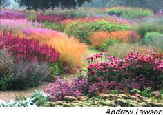 Piet Oudolf Lush, looks like a watercolor