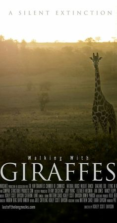Walking with Giraffes airing tonight on Nat Geo Wild at 8pm. A must see...