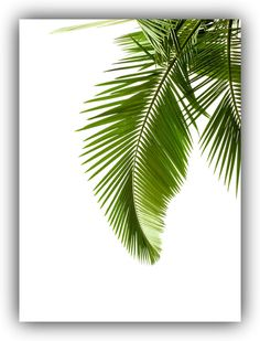18 x 24 Tropical Leaf Print 5 backgrounds Green