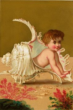 Public Domain Seashell Baby Image - Free from The Graphics Fairy
