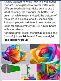 Rainbow roses -- great science experiment to try with kids! Cool Science Experiments, Science Fair Projects, School Projects, Projects For Kids, Crafts For Kids, Plant Experiments, Plant Science, Science Chemistry, Physical Science