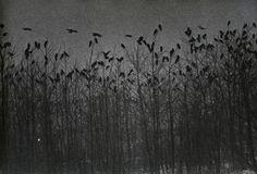secretcinema1:  Nayoro, from Solitude of Ravens, 1976, Masahisa Fukase
