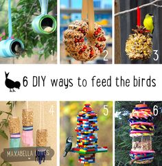 Bird feeders to make at home