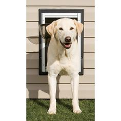 "Petsafe Wall Entry Pet Door, OH MY GOSH GENIUS!....I've been racking my brain trying to figure out how to preserve our yard...dog door in the side of the wall off the kitchen, and gate in the open end, instant ""dog run"" for Cozi, and she can go out whenever she wants, and it saves our yard from getting totally trashed! LOVE this idea! :)"