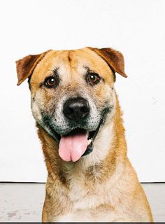 6-18-17 Senior STILL THERE Conroe Animal Adoption Center How can it be that John is the 2nd LONGEST resident at the shelter and he is STILL there..??!!! John has been at the shelter since FEBRUARY..He's listed at 8 years old..HW POS..A volunteer FAVORITE..Great on leash.. Housebroken We NEED to make SPACE and clear some kennels..PLEASE help John to get OUT of the shelter..