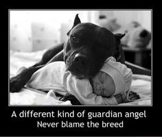 "Pitbulls were originally known as nanny dogs - because they are great with children and they will protect ""their"" children no matter what. They will literally put their own life on the line without giving it a second thought."