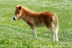 How Long Do Horses Live and Everything about Horse Age Cute Baby Horses, Baby Farm Animals, Cute Animals, Horse Pictures, Animal Pictures, Funny Babies, Cute Babies, Horse Age, Sr1