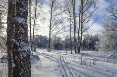 Зимний пейзаж на берегу канала имени Москвы.Россия.(фото №14)