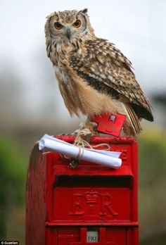 Royal Owl Mail