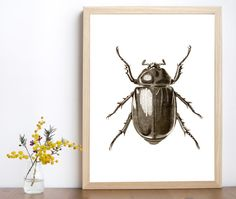 Insect poster, beetle printable, insect art, insect print, minimalist insect, insect illustration, insect wall art, entomological art