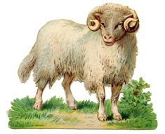 Vintage Sheep Image - Curly Horns - The Graphics Fairy