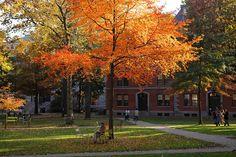 Fall colors in Harvard yard. DiscoverHarvard.com