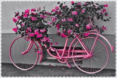 ♥♪Bicycle and flowers♥<>♥