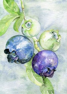 blueberry watercolor art print, fruit illustration, Not Shipping At This Time Watercolor Mixing, Watercolor Art Diy, Watercolor Fruit, Watercolor Pictures, Fruit Painting, Watercolor Flowers, Watercolor Paintings, Painting Art, Fruit Illustration