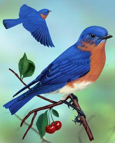 Eastern Bluebird_CEPortrait_1200