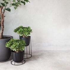Menu Blumentopf Wire Pot