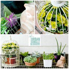 Urban Jungle Bloggers - Watering your plants via @pepementa