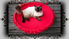 """""""Alternative"""" Necklaces for Our Cats and Dogs Pet Websites, Diy Cat Enclosure, Cat Stairs, Cat Nutrition, Diy Cat Toys, Hula Hoop, F2 Savannah Cat, Dog Furniture, Cat Condo"""