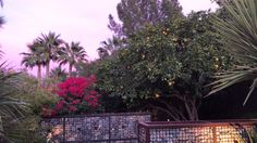Paradise Valley Arizona, Plants, Plant, Planets