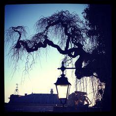 Un albero può avere radici molto profonde...